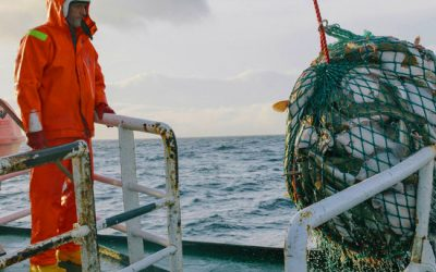 Landing obligation: First study of implementation and impact on discards