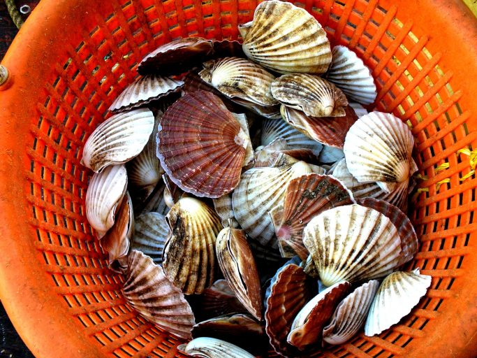 The Isle of Man government, through DEFA. has launched a public consultation seeking views on the future of the island's King Scallop fishery