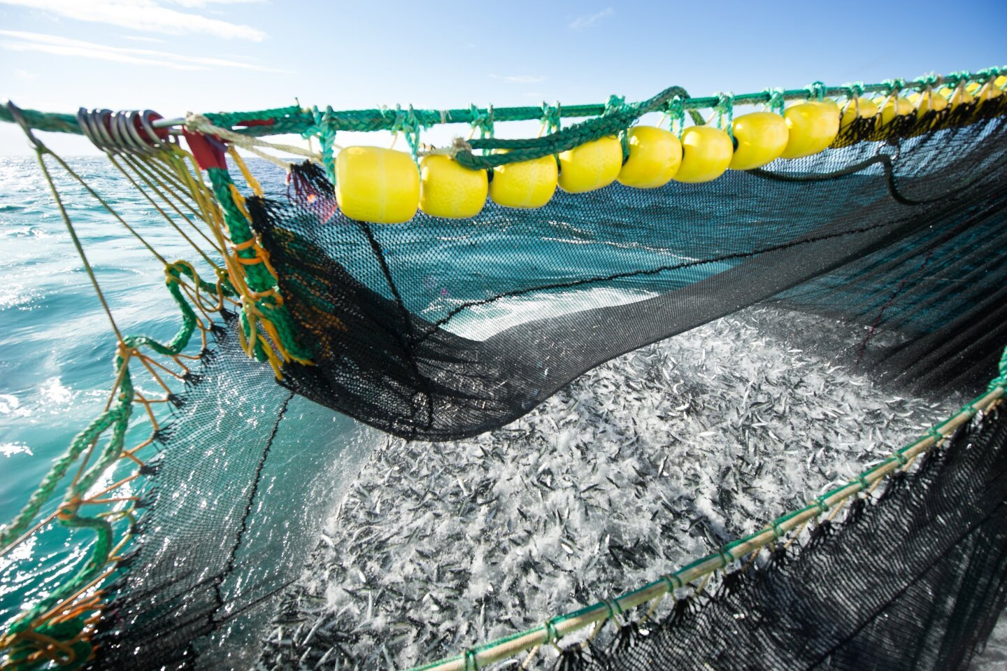 Responding to the 'Physical Science Basis for the Sixth Assessment Report from IPCC, Our Fish Calls on EU to End Overfishing