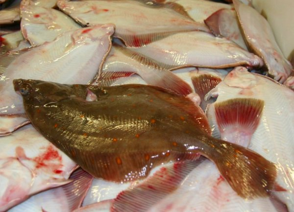 Marine Management Organisation figures show that a supposed £32m windfall for North Sea Sole and Plaice is nothing but Paper Fish