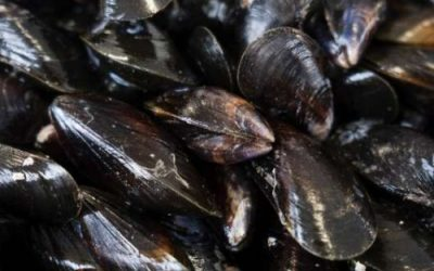 Where are the alternative markets for LBMs asks Devon mussel producer