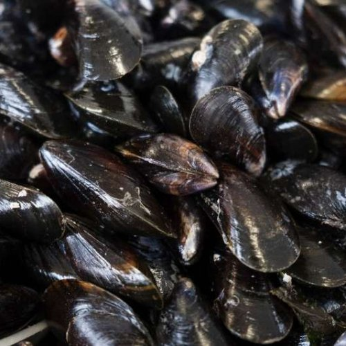 Eustice promises LBM exporters that he will find alternative markets for their produce but where are the markets asks Devon mussel producer