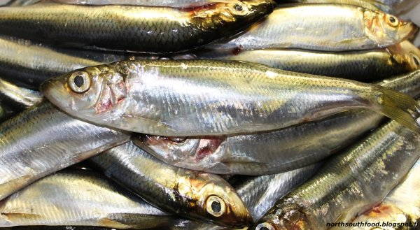 Marine researchers in Sweden have called for more protection for herring stocks in Swedish waters by move the limit for trawling