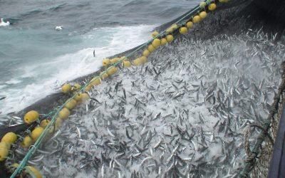 EU action needed against Norway and Faroe Islands overfishing Mackerel