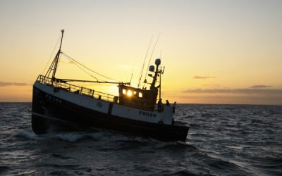 Scottish haddock and Cornish sardines star in MSC Sustainable Seafood Week campaign