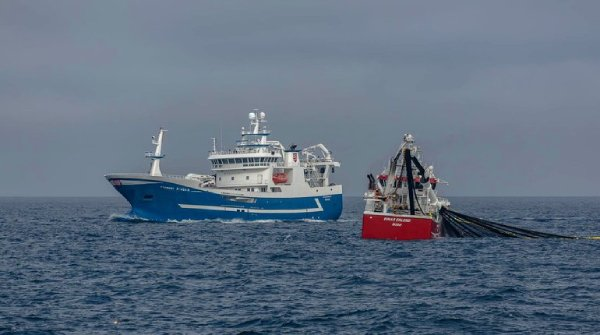 The Norwegian mackerel boats ease back landings to 46,600 tonnes in week 35 as processors are unable to cope with supply. Photo: Norges Sildesalgslag 2021