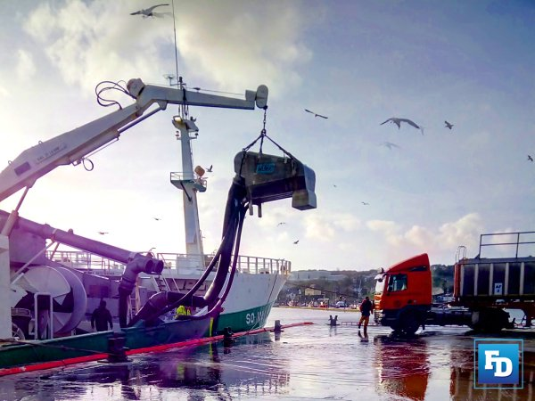 ICES releases advice on the fishing of Atlantic Mackerel in the Northeast Atlantic and adjacent waters for 2022