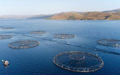 The bridge between fishing and aquaculture – WCRIFG