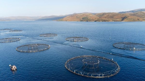 The WCRIFG has issued a statement on the ongoing growth of aquaculture along the west coast of Scotland which is afecting traditional fishing