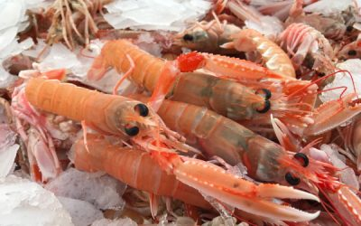 UK Seafood Innovation Fund Continues to Push the Boundaries with a New Call for Innovative Ideas