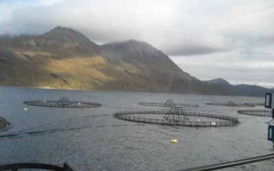 Dutch fish processors warn against sanctions over Norway pelagic quotas