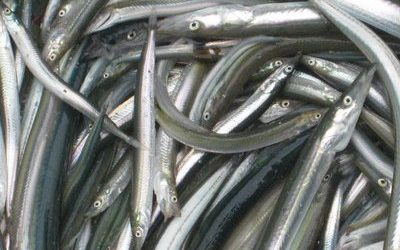 Call for Evidence on future management of Sandeels and Norway pout